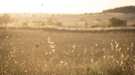 Agriturismo Il Pino Grande